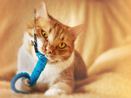 Cats and Catnip: Everything You Need To Know