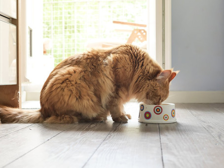 How to Select The Right Healthy Cat Food