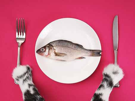 What Makes High Quality Cat Food