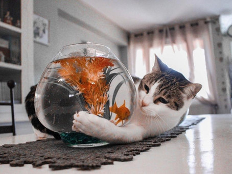 Learn why you should add seafood to your cat's diet