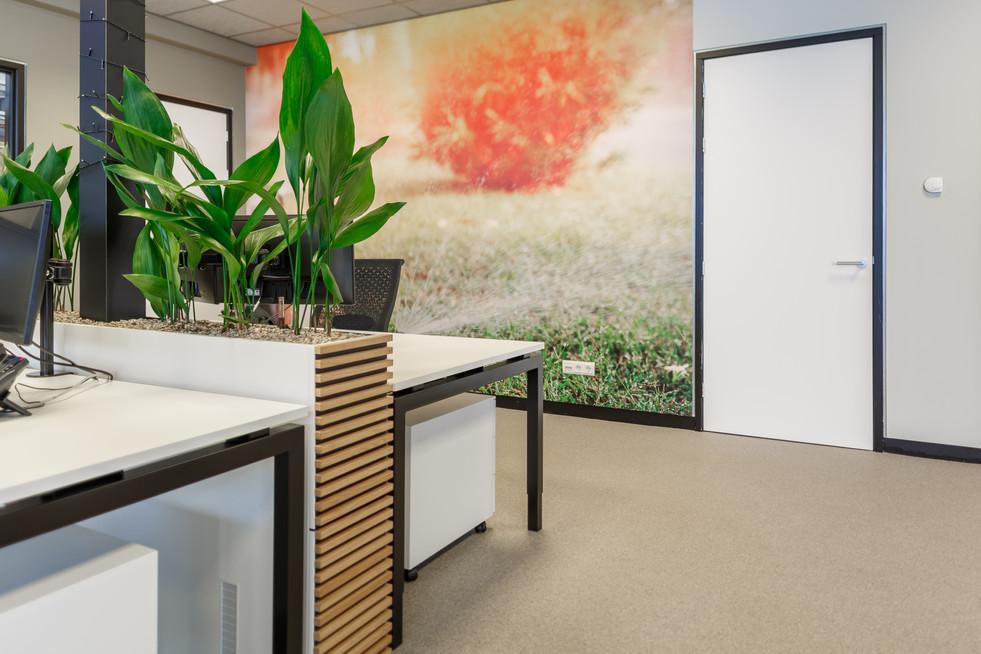 door het plaatsen van planten en de juiste kleuren toe te passen is een sfeervol kantoor ontstaan