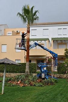 empresa de jardinería, Podas de palmeras, poda, Jardinería en cadiz, jardinería en San Fernando, jardineros, jardinería comunidades, Picudo