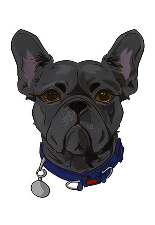 shauns dog new no bg or text.jpg
