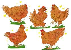 chickens new.jpg
