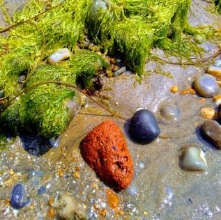 Pumice & Seaweed