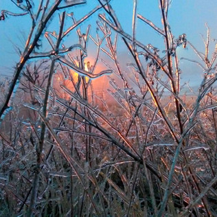 Ice Storm at Dusk