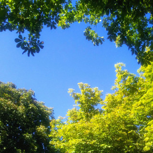 Between the Leaves