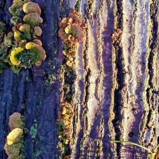 Tree Bark & Fungi