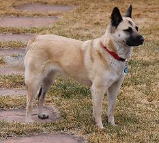 Lexy, United Animal Friends.jpg