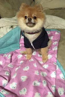 Pomeranian Customer!