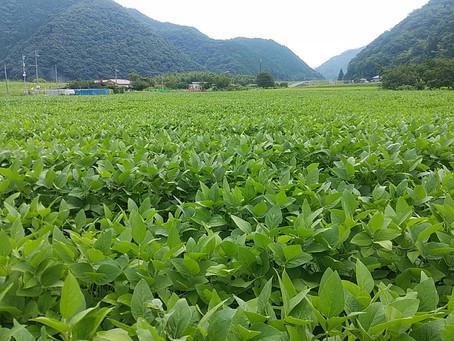 農業の個別性