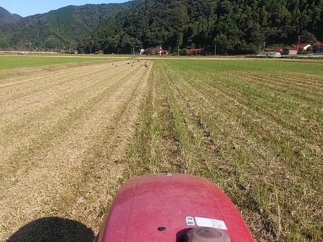 来期の稲作が始まった