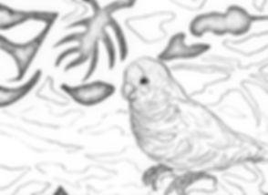 Quaker_Parrot_2020_edited.jpg