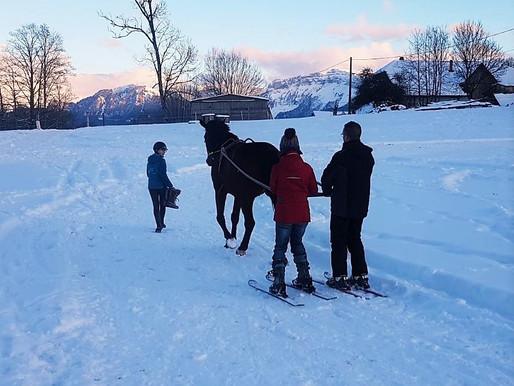 Ski Joering dans le terrain de cross !