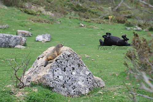 Cheval et curieuse marmotte