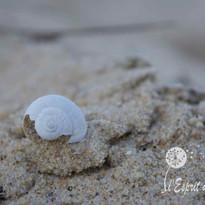 Escargot de de sable