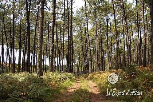 Entre Forêt et Océan