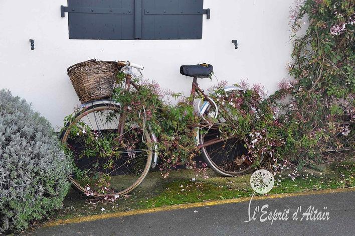 Vélo île de Ré, Sorties pédestres