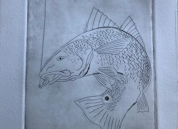 Redfish, intaglio print - wp 2