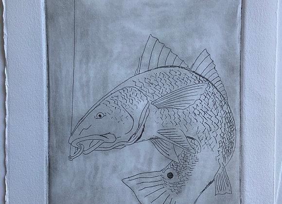 Redfish, intaglio print - wp 1