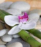 Orchidees stones 1_edited.jpg