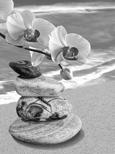 orchidees stones 2.jpg