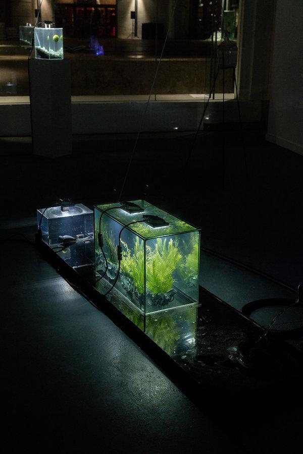 'Biotopes' 2019