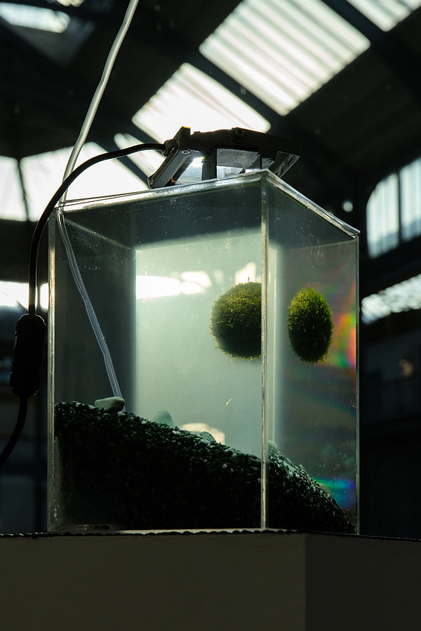 'Untitled Globe' 2019