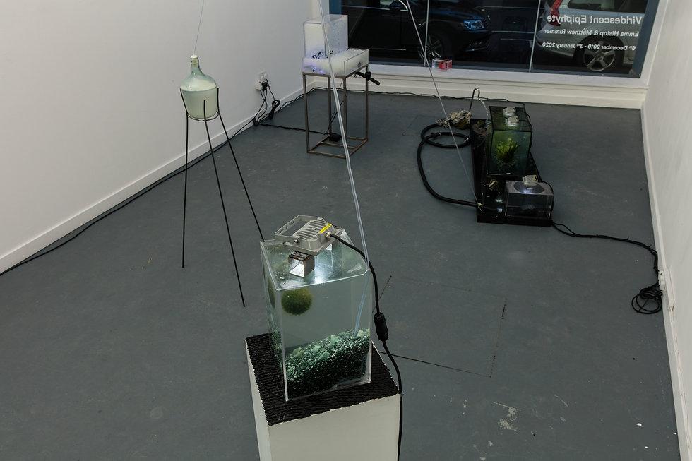 Viridescent Epiphyte installation