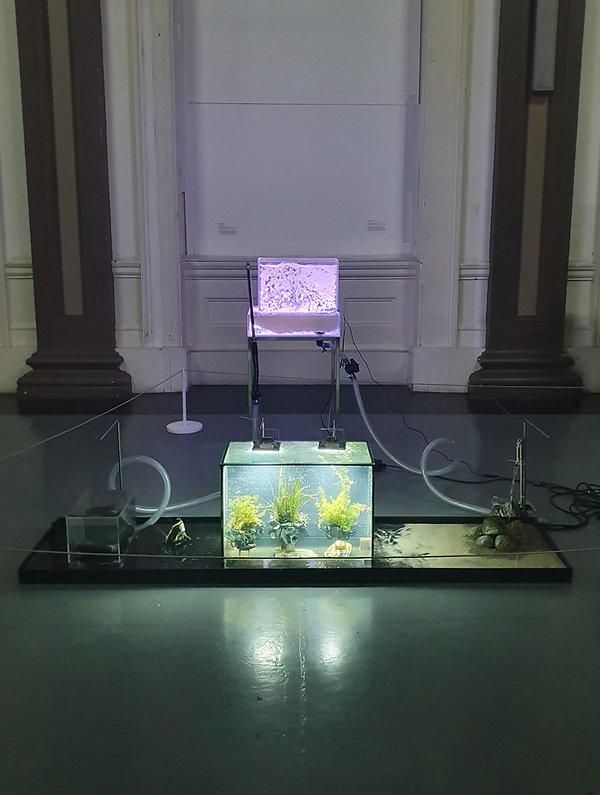 Biotopes 2019