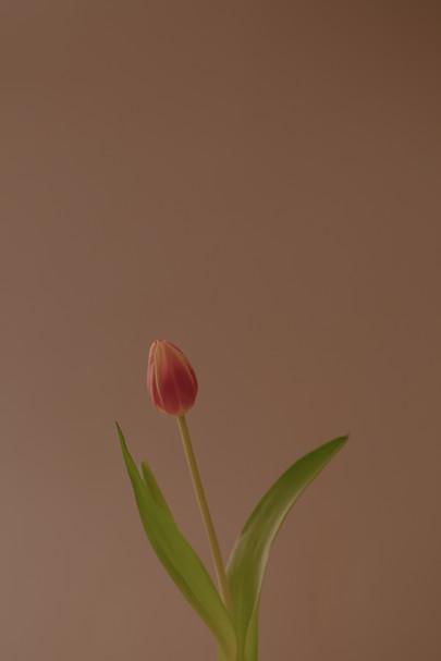 Flower #1923, 2020
