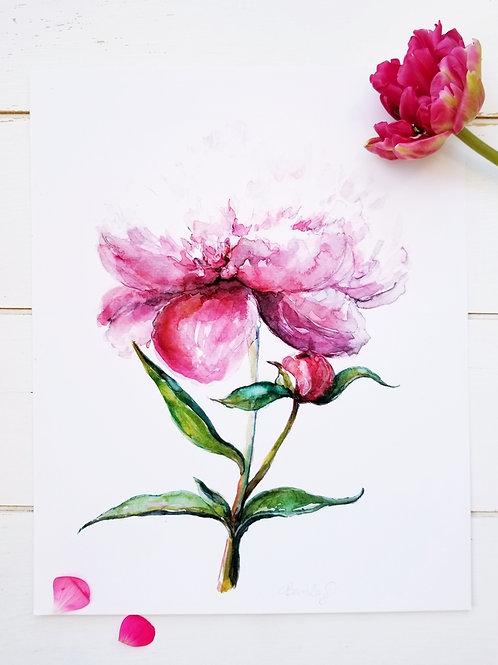 Pink Peony Original Watercolour