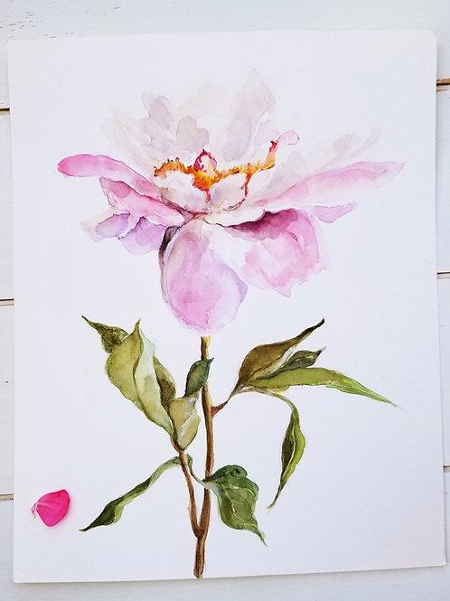 Pale Pink Peony, Art Print