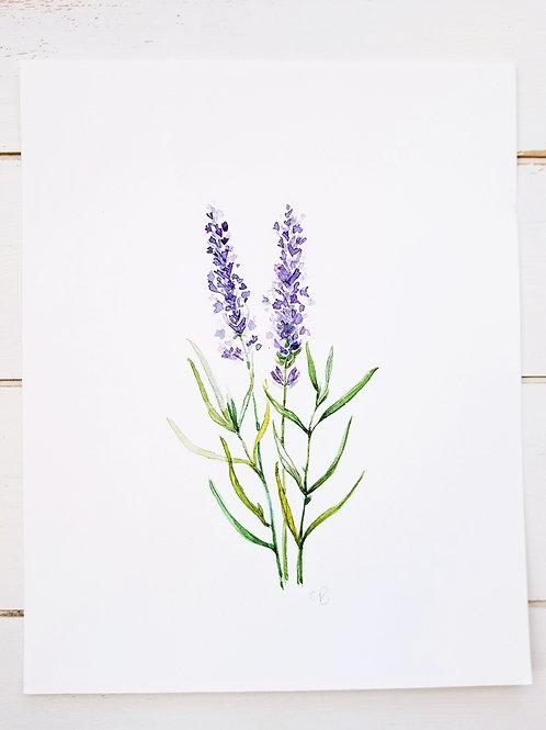 "Lavender Spring, Art Print, 8"" x 10"""
