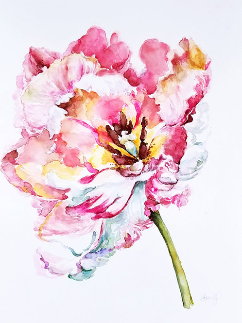 Parrot Tulip SOLD