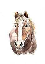 HORSE face forward final.jpg