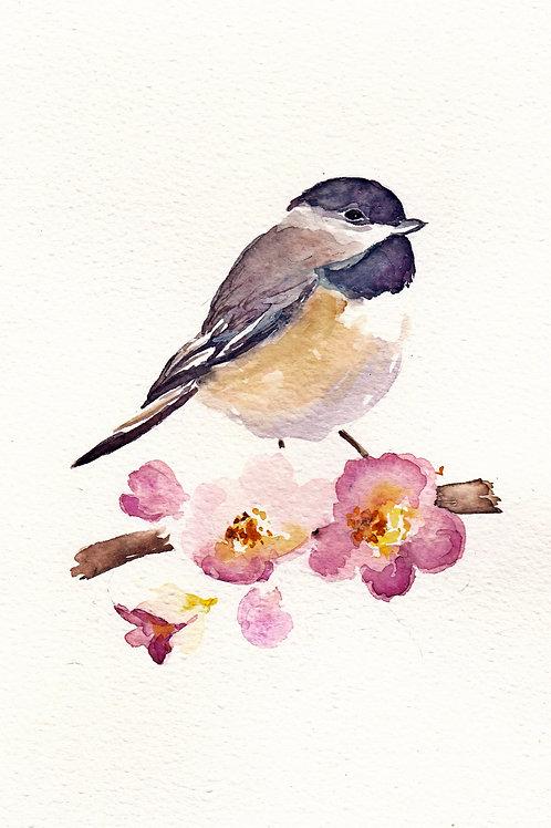 Chickadee and Apple Blossoms 2