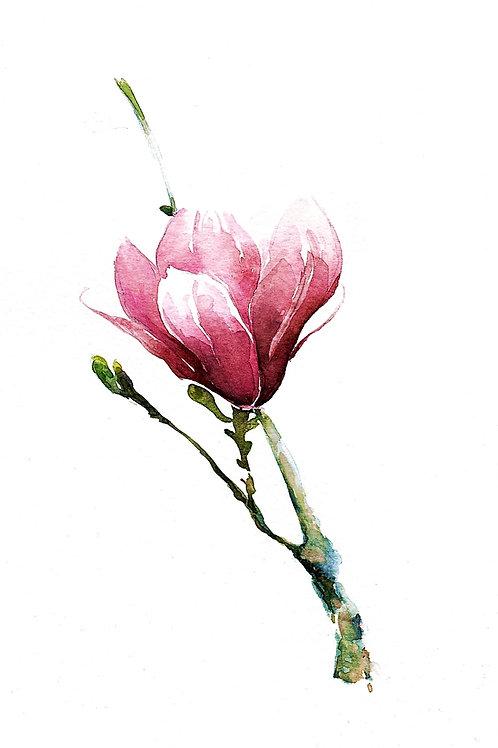 Magnolia, SOLD