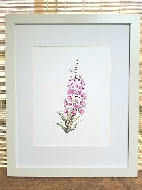 "Fireweed Art Print, 11"" x 24"" NEW!"