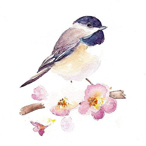 Chickadee and Apple Blossoms