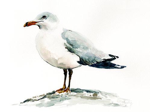 Seagull, ART PRINT