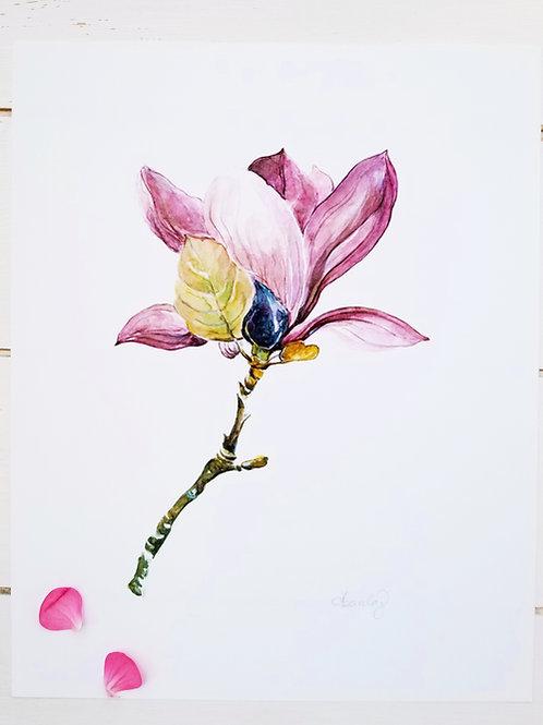 "Sweet Magnolia 2,  Art Print,  8"" x 10"","