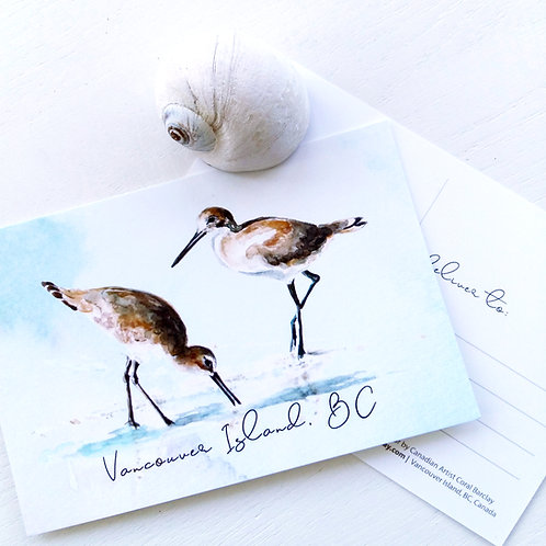 Sandpipers, POSTCARD, Vancouver Island