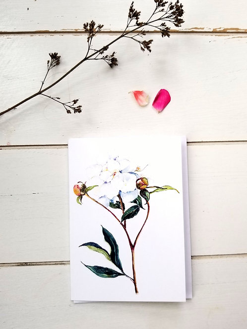 NOTECARD, White Peony, SOLD OUT