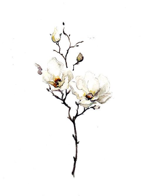 Magnolia Branch Original Watercolour SOLD