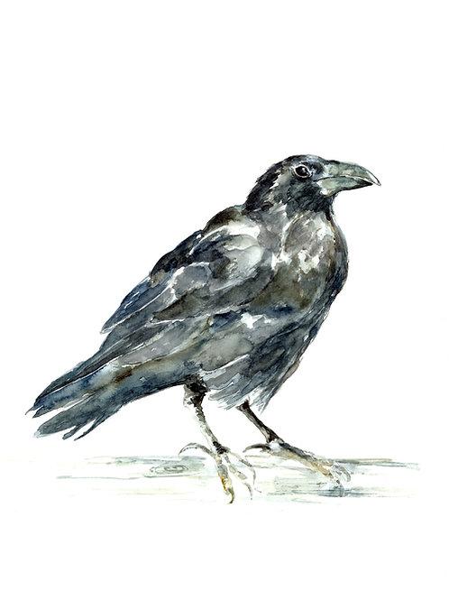Raven, Art Print