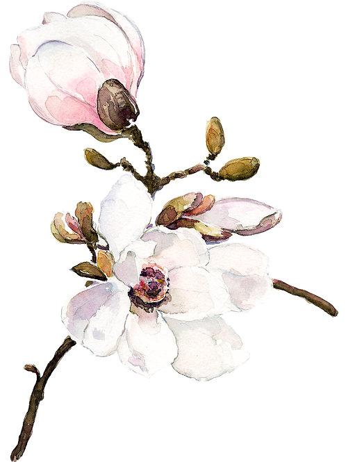 "Sweet Magnolia, Art Print, 8"" x 10'"