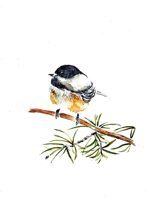 Chubby Chickadee SOLD