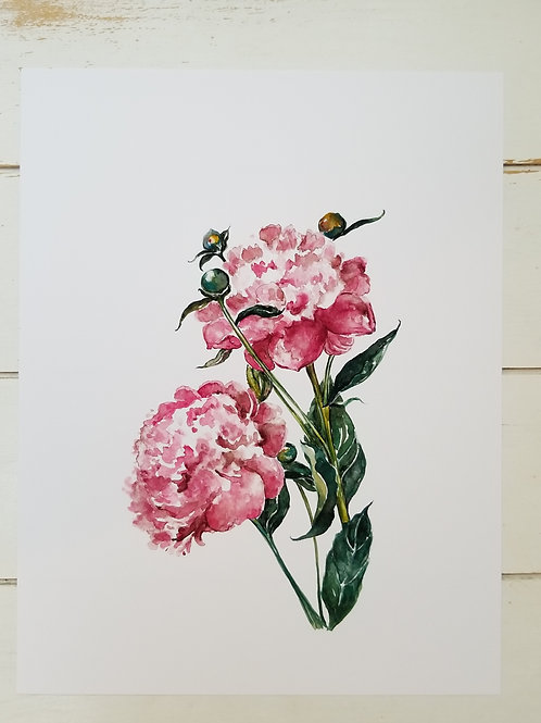 Two Pink Peony's