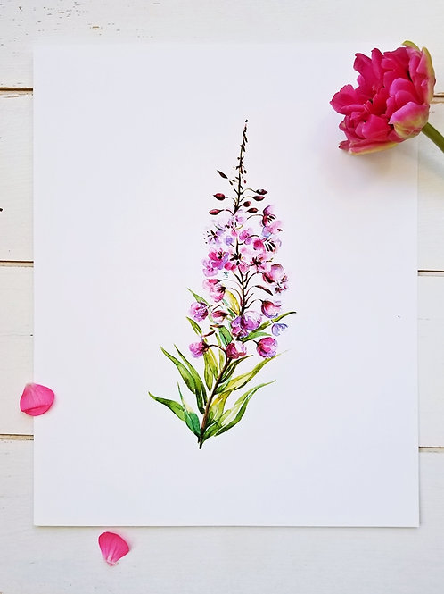 """Fireweed, Art Print, 11"""" x 14"""" & 8"""" x 10"""", 11 x 14 sold out"""